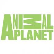 Официално лого на Animal Planet